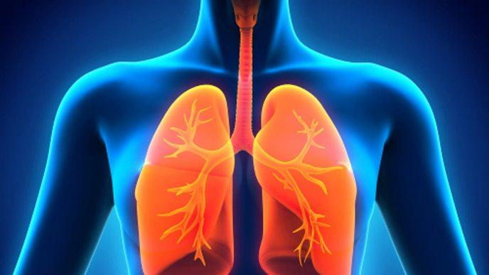 Sistema pulmonar.